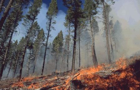 Wildfire Investigation